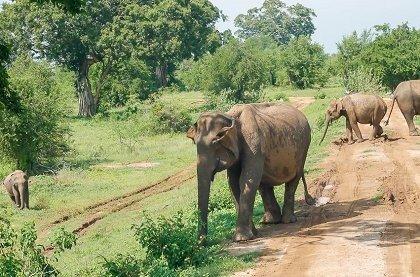 11044925085 774a9f12dc o 1000x667 croped 420x277 - В Шри Ланке завершены работы по строительству сафари-парка