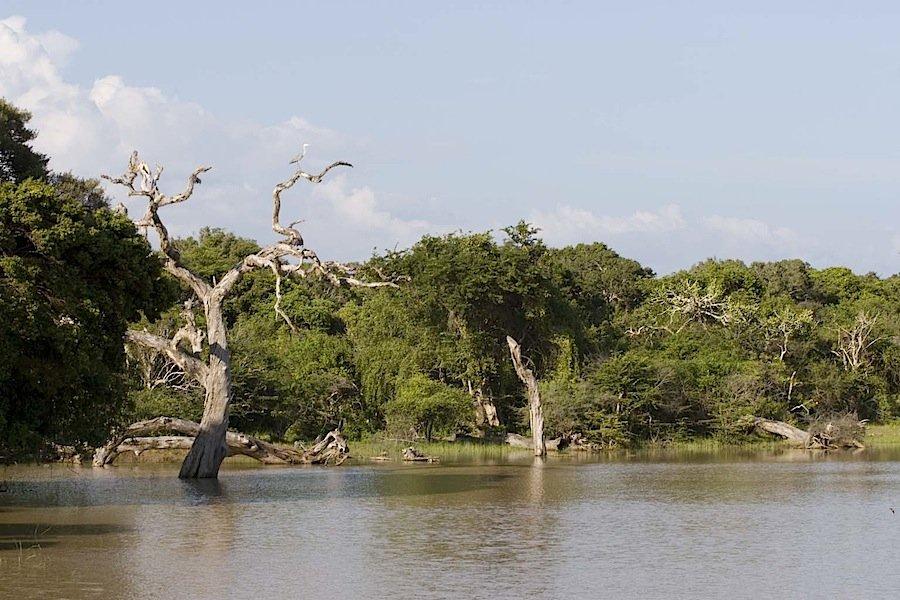 sri lanka - В Шри Ланке завершены работы по строительству сафари-парка