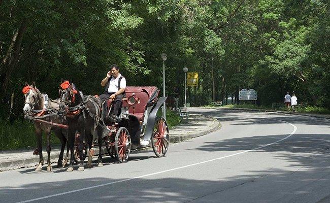 albena12 - Курорты Болгарии