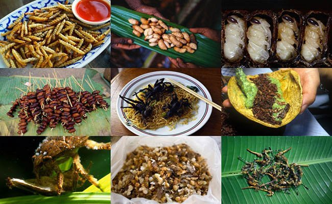 nasekomie - Вьетнамская кухня