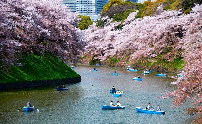 sakura - Природа Японии