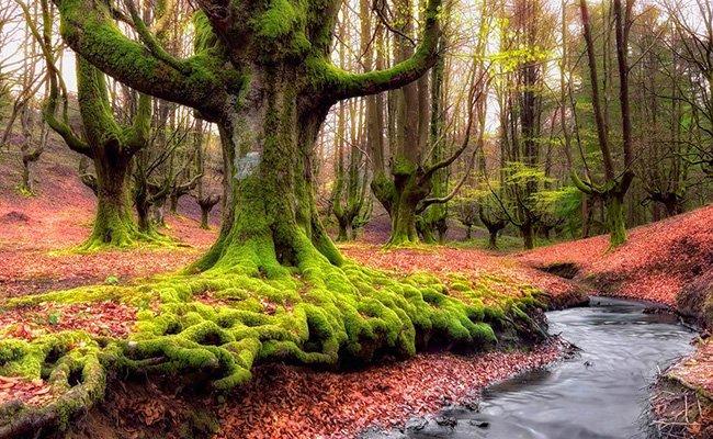 les - Природа Испании