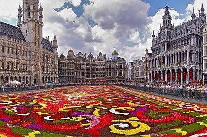 flower carpet brussels 0 croped - Нидерланды + Бельгия: Незабываемый Амстердам и цветочный ковер на Grand-Place в Брюсселе