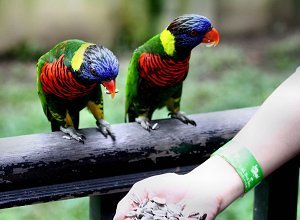 kuala lumpur birds.jpg.1000x0 q80 crop smart croped - Путешествие в Малайзию