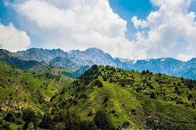 горы, узбекистан, эдельвейс
