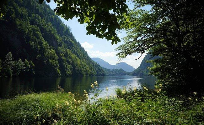 Леса занимают больше 40% территории Австрии.