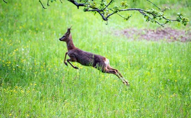 В австрийских горах можно встретить диких животных.
